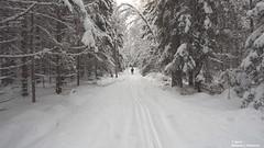 (alpros) Tags: sweden schweden sverige scandinavia northerneurope nordeuropa skandinavien färnebofjärden gysinge gästrikland gävleborgslän sandvikenskommun österfärnebosocken mattö schnee snö snow vinter winter dalälven nedredalälven
