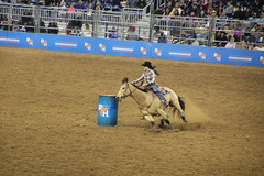IMG_1619 (melodavis@sbcglobal.net) Tags: rodeohouston 2018 rodeo livestock heifer farmlife steer saddlebronc bronc bull bullriding calfscramble alpaca