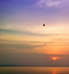 The lonely bird heads home at the end of the day. (Bhuvan N) Tags: krsbackwaters sunset birds bird karnataka mysore mysuru india indiatravel waterfront river clouds nature naturephotography evening