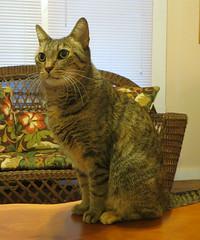 Key West (Florida) Trip 2017 7533Ri 5x6 (edgarandron - Busy!) Tags: coco cat cats kitty kitties tabby tabbies cute feline florida keys floridakeys keywest authorsofkeywest