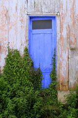 Monday Blues (ᙢᗩᖇᓰᗩ ☼ Xᕮᘉ〇Ụ) Tags: bluedoor pflanzen plants blau tür blauetür μπλεπορτα griechenland greece ελλαδα μπλε χρωμα farbe colour abandoned verlassen εγκαταλειμμένο woodhouse holzhaus ξυλινοσπιτι efeu φυτα lächeln smile close