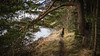 Gladhouse Reservoir March 2018-7 (David Fitzell Photography) Tags: gladhouse reservoir midlothian scotland outdoors nature fun sony a7ii sony35mm forest trees