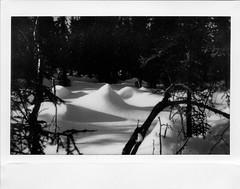 Trailside (Robert Drozda) Tags: fairbanks alaska wintertrail sledroad chenahotspringswintertrail snow bottomland borealforest fujiinstaxwidemonochrome instantfilm dogmushing drozda