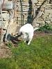 20180325_093617 (2) (kriD1973) Tags: europa europe italia italien italy italie alpi alpen alps alpes trentinoaltoadigesüdtirol trentino valdisole malè bolentina pets haustiere animali domestici cat gatto katze chat pet cats gatti chats katzen gato felino animal animale tier