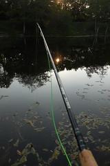 Fishing at sunset (Steenjep) Tags: sø pond fisk fish fishing fiskeri flyfishing fluefiskeri kinetic rod stang line sinding fiskesø