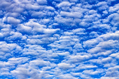 #FillTheFrame with Clouds (Wal Wsg) Tags: filltheframe with clouds 7dwf 7dwfcrazytuesdaytheme nubes nube cloud cielo sky cieloargentino cielonublado argentina provinciadebuenosaires mardeajo phwalwsg