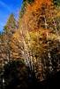 Black Forest autumn (film) (mkk707) Tags: leicaflexsl2 summicronr50mm itsaleica leitzcamera leica 35mmfilm film analog agfavista400 wwwmeinfilmlabde vintagelens vintagefilmcamera autumn blackforest schwarzwald