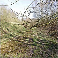 propsteier wald 12 (beauty of all things) Tags: eschweiler stolberg propsteierwald filigrangestrypp zweige twigs
