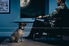 The Good Boy (Rick Nunn) Tags: jrt loyal blue man strobist portrait gel jack bandit jackrussell terrier