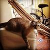 (monicad80) Tags: riodejaneiro gato cat felini