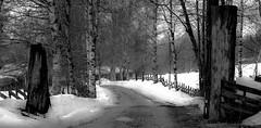 Welcome (evakongshavn) Tags: gate winter winterwonderland winterlandscape snow landscape landschaft paysage hiver hivernal tree forest wald winterwald bw bnw bnwphoto blackandwhite blackwhite blancoynegro blacknwhite blahblahscape biancoenero sw svarthvit fog mist foggyday mistshot 7dwf