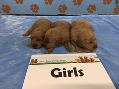 Dakota Girls pic 3 4-15