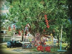 https://goo.gl/maps/gwoDcmc4iSH2  #tree #trip #travel #holiday #traveling #tree #Asian #Malaysia #negerisembilan #holidayMalaysia #travelMalaysia #树 #旅行 #度假 #亚洲 #马来西亚 #森美兰 #马来西亚度假 #自游马来西亚 #rural #乡村 #kampung #新村 #灯笼 #lantern