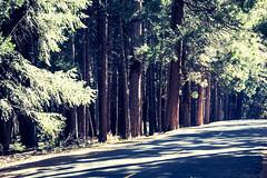 Yosemite.Road.2600p.245 (l.dardennes) Tags: yosemite yosemitenationalpark california usa canoneos7dmarkii sigma1750mmf28 yosemitevalley étatsunis us