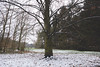 The tree (der_Unsichtbare74) Tags: winter snow tree park overcast outdoors outside white grey clouds cloudy nature plants treeline green brown cold daylight landscape forest trees season wood day frost snowy scenery country