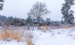 Snow Gate (nicklucas2) Tags: snow landscape seasons spring tree gate