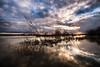 flooded landscape (bjdewagenaar) Tags: photography photograph photographer photooftheday sony sonyalpha sonyphotographer sonyimages sonya77ii sonya sigma wideangle ultrawideangle sky clouds water landscape landscapephotography waterscape reflections river merwede gorinchem gorcum holland dutch sun raw lightroom