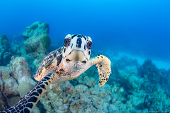 Thats the last time I let Mr. Turtle use my camera! (NickPolanszkyPhotography) Tags: turtle nick polanszky photography canon 5diii aquatica scuba diving dive bonaire ceribbean