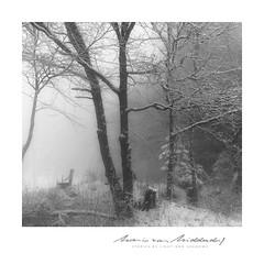 snowforest (MvMiddendorf) Tags: fog snow trees eifel