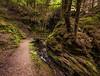 Path To The Bridge (Click And Pray) Tags: managedbyclickandpraysflickrmanagr pucksglen stream river chasm gorge horizontal landscape scotland argyll path rural track trail trees forest green pucksglenstreamriverchasmgorgehorizontallandscapescotlandargyllpathruraltracktrailtreesforestgreengbr