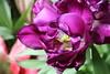 IMG_6909 (Usagi93190) Tags: macro flower biltmore estates greenhouse gardens ashville north carolina