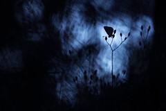 Sur mon arbre perché. (SweeP_64) Tags: sur mon arbre perché papillon butterfly macro proxi nature cyrille masseys 6ril