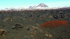 Lava fields looking away from Hverfjall