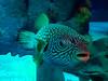 2018_03_SeaLife09 (GrazerX) Tags: sealife lochlomond aquarium fish scotland graemesimpson samsung galaxy s9 s9plus