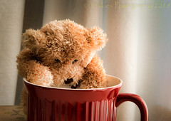 I Dropped a Nickel in Here (HTBT) (13skies) Tags: htbt teddybeartuesday mug nickel dropping clumsy fool needing wanting redt huntley happyteddybeartuesday sonyalpha99 teddybear curtains money helping lendingahand