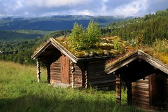 Backintheday - Last century (annazelei) Tags: natural natura nature canon eos outdoor landscape paysage norge norway holiday summer green wood woods wooden forest tree mountains hike hiking trip tour air old last past century house roof plant flora backintheday