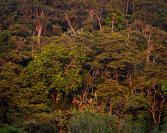 Sunset Trunks (yotam.fogelman) Tags: fujifilm xt20 mirrorless nature outdoors landscape trees forest jungle colombia