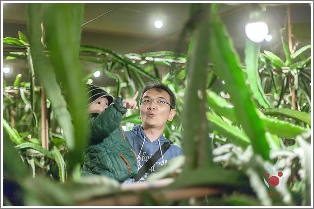 火龍果園星光野餐Ⅱ 找地瓜 烤地瓜 吃地瓜 (28)
