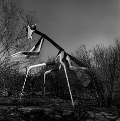 Let us prey (rickweber) Tags: hasselblad 500c trix film blackwhite sculpture
