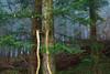 IMG_5109 (Bartek Rozanski) Tags: badenwurtemberg kandel schwarzwald zima altersbach germany blackforest deutschland mountains winter hochschwarzwald