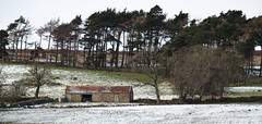 The Old Shed in the Snow (Benjamin Driver) Tags: westerdale northyorkshire north yorkshire york moors northyorkmoors northyorkshiremoors landscape scape bleak snow shed barn trees winter farm farmland desaturated quiet england northeast northeastengland 2018