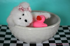 LOLLY LOVES HER PINK DUCK (Anne-Miek Bibbe) Tags: lolly teddybear beertje speelgoed toy spielzeug giocattoli juguetes bringuedos jouets canoneos700d canoneosrebelt5idslr annemiekbibbe bibbe nederland 2018 badeend pink bad bathduck duck happyteddybeartuesday