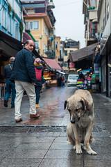 IMG_7034 (Artun York) Tags: canondslrdslr dijitalreflect flickr flickraward flickrspain fotograf landscape landscapephotography canon canon5d 5dmarkii 5dmark2 5dmk2 5dmkii 50mm 50mmstm niftyfifty turkey istanbul türkiye street photography