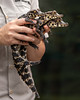 Three Little Crocodiles (Penny Hyde) Tags: babyanimal crocodile sandiegozoo
