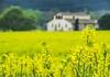 La nostra primavera (jocsdellum) Tags: primavera spring catalunya santacolomadefarners groc yellow amarillo campsdecolza yellowfields desenfocament desenfoque softfocus blur beforetherain casa house masia cottage