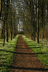 Wiosna idzie (jacekbia) Tags: europa polska poland mazowsze krasne park zieleń ścieżka aleja nature natura krajobraz landscape krasiński droga road trail drzewa tree grass trawa