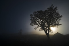 Boqueixón (Noel F.) Tags: sony a7r ii voigtlander 12 iii vm wide heliar boqueixón galiza galicia sunrise mencer fog mist neboa