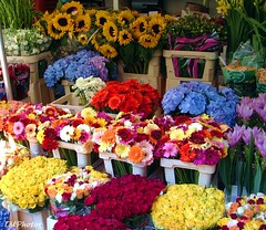 Flower Market (N. Mexico) Tags: flowers holland netherlands colors dutch colorful brightcolors flowermarket manycolors flowerstalls