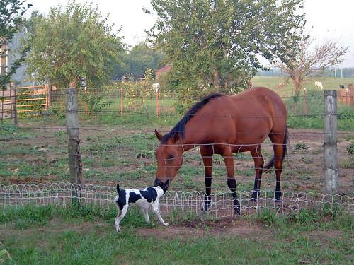 2003-09-10 - Peedee&Horses-03
