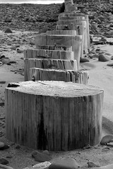 B+W Dunster Beach - Wooden Groynes (John Pailing) Tags: wood bw white black beach stone sand groyne dunster groin minehead