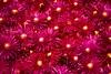 Flores de verano (pericoterrades) Tags: flowers flores 2006 viajes pericoterrades gtaggroup