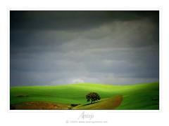 after the storm (PG photo) Tags: storm verde green portugal rain topv111 landscape bravo chuva paisagem alentejo 1on1 tempestade sobreiro azinheira corkoak 2for2