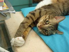 EPSN6460 (jacky elin) Tags: cats brown cat mix tabby jacky