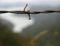 Pendant (wanderingnome) Tags: mist water 510fav droplets bokeh explore venturacounty lakecasitas marinelayer theworldthroughmyeyes thebiggestgroup 080406 ©wanderingnomez 320explorepage082406
