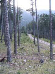 Forest road (stefg74) Tags: wood trees mountain tree nature forest landscape free olympus greece steven stg gst olympos stefano stefanos olimpos mitikas freeuse  mytikas kserolakas   stggr1     justrss justrsscom wwwjustrsscom httpwwwjustrsscom stefg74 olimposeu wwwolimposeu