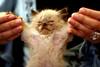 And the WINNER isssssss  Kittiee Tyson!!! (-ViDa-) Tags: pet cats cat winner meaw kittie